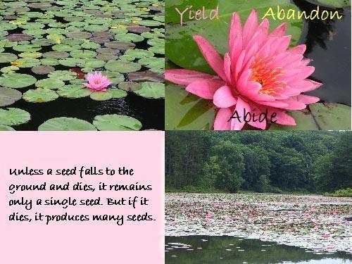 Yield, Abandon, Abide