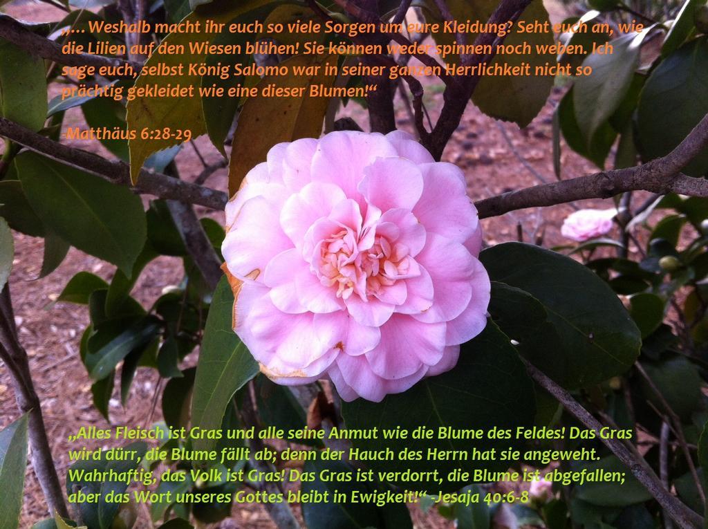 """""""Wie die Blume des Feldes ..."""""""